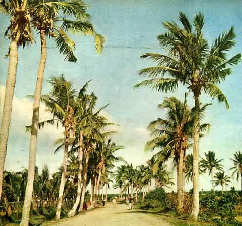 美丽富饶的海南岛