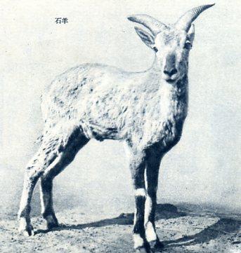 动物种类繁多,有寒带,温带的动物
